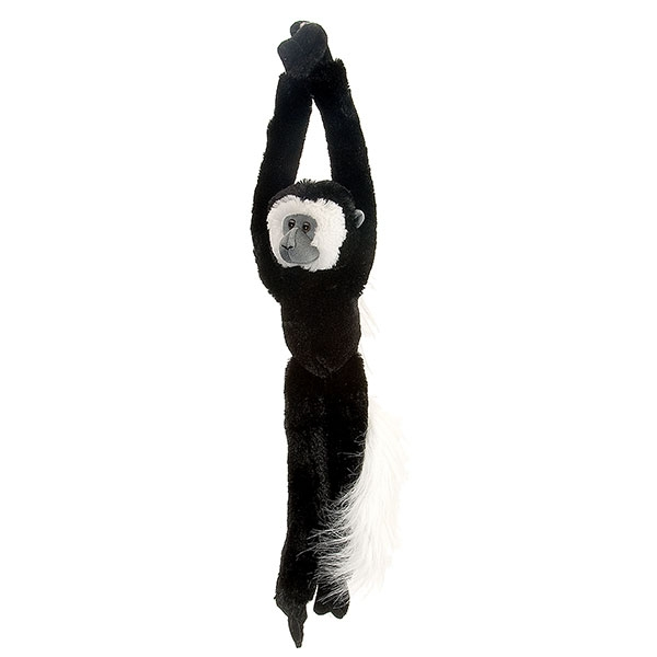 COLOBUS MONKEY HANGING